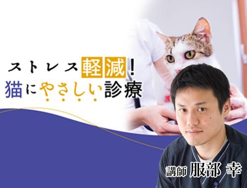 ストレス軽減!猫にやさしい診療