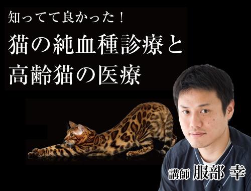 知ってて良かった! 猫の純血種診療と高齢猫の医療