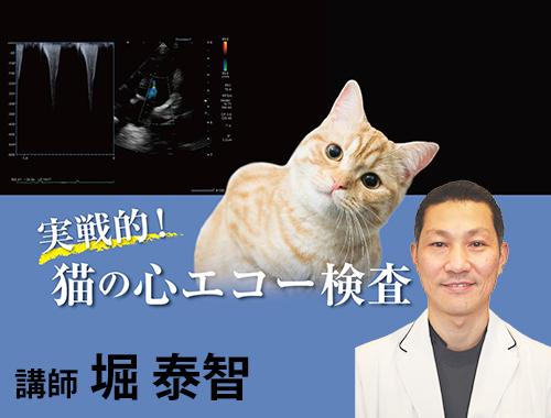 実戦的!猫の心エコー検査