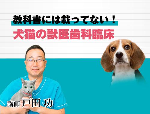 教科書には載ってない!犬猫の獣医歯科臨床