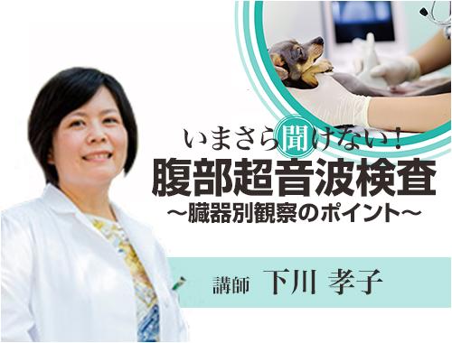 いまさら聞けない! 腹部超音波検査〜臓器別観察のポイント〜